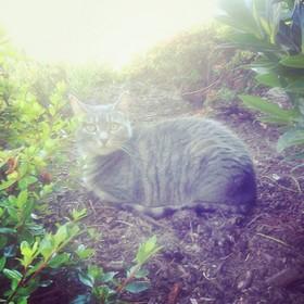 Jules enjoying the outdoors.